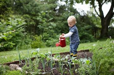 Toddler boy watering plants in backyard