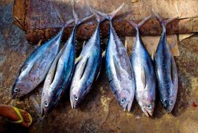 tuna fish.jpg